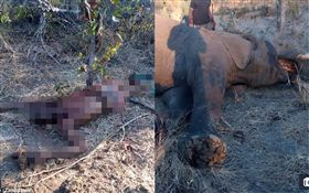 辛巴威訓象師被大象殺死。(合成圖/翻攝自《每日郵報》)