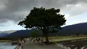 城武樹防颱1000