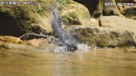 臺灣藍鵲洗澡