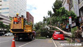 尼莎來襲北市樹倒嚴重 工務局/大地工程處進行清理 北市府提供