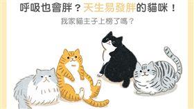 名家/毛起來/易發胖的貓咪品種