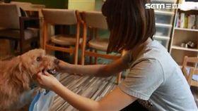 毛小孩,流浪狗,寵物友善餐廳,訓練,台中,咖啡廳,領養,狗,中途之家(圖/校園記者柯文淨拍攝)