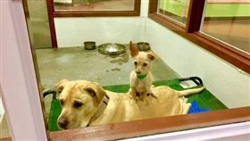 流浪狗收容中心,領養,狗狗,汪星人(圖/Maricopa County Animal Care & Control臉書)