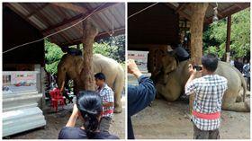 泰國,大象,主人,靈堂,跪拜(圖/翻攝自ทัชดา ชื่นพระแสง臉書)