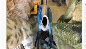 澳洲,恐龍博物館,迅猛龍,模型,斬首(圖/翻攝自www.abc.net.au/news)