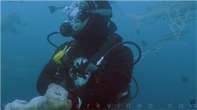 鯊魚,大白鯊,血液,割腕,潛水員,Skyler Thomas 圖/翻攝自YouTube