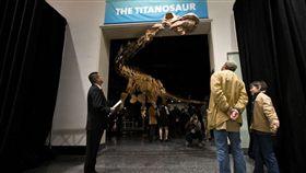 恐龍,紐約,阿根廷,草食,巴塔哥巨龍,化石