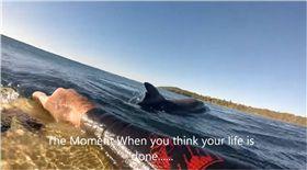 衝浪,澳洲,Craig Bateman,鯊魚,魚鰭,海豚 圖/翻攝自the Sun