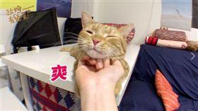 貓咪,喵星人,拉姆有幾噗,打招呼,攻擊性,撫摸 (圖/翻攝自拉姆有幾噗臉書)