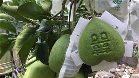 八里心型文旦柚,愛心形狀吸睛,應景搭上七夕情人節。