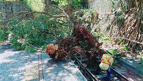 台鐵深澳線路樹倒塌/台鐵提供