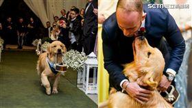 黃金獵犬peanut當花童給主人祝福