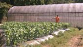 內湖,向日有機農場,毒癮,農業(圖/實習記者李詩敏攝影)