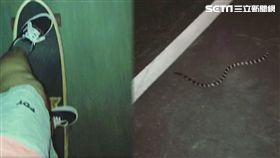 滑板遇到蛇