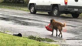 颶風肆虐 汪星人叼「乾糧」逃難去! 圖/翻攝自Tiele Dockens臉書