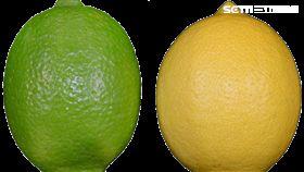 黃色就是萊姆?錯!檸檬不是你想的那樣 圖農委會