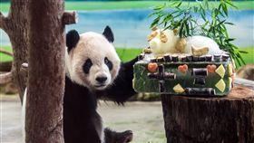 團團圓圓滿13歲 特製蛋糕慶生(1)台北市動物園大貓熊「團團」、「圓圓」將滿13歲,保育員選定29日幫牠們慶生,並送上各自專屬的特製蛋糕。圖為「團團」與牠的蛋糕。(台北市動物園提供)中央社記者梁珮綺傳真 106年8月29日