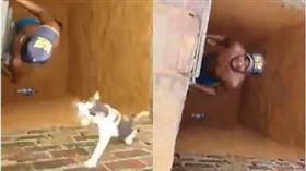 毛孩,貓咪,洞穴,救援,梯子,忍者,蜘蛛 圖/翻攝自YouTube