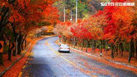 楓葉,秋楓,韓國旅遊。(圖/韓國觀光公社提供)