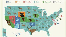 美國最常發生車禍意外的動物是鹿。(圖/翻攝自網站「Wildlife On The Road」)