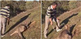 澳洲,袋鼠,殘忍,虐殺,影片,網友,華裔,大陸,瀋陽,肉搜