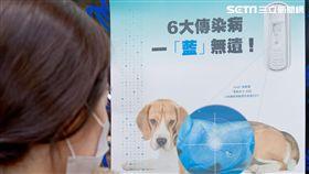 狗狗每年打疫苗就萬無一失?7成飼主迷思恐害毛孩命 圖/利眾公關提供
