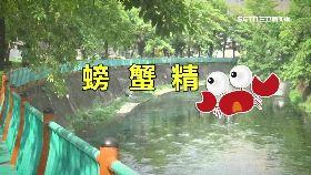 江川螃蟹精1800