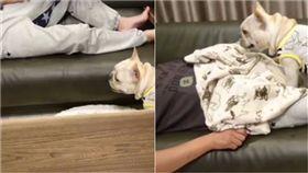 鬥牛犬,汪星人,貼心,蓋棉被,暖舉,窩心 圖/翻攝自BoB IG https://goo.gl/PYnL36