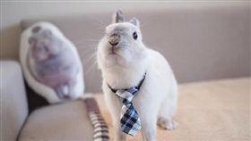 兔子,https://www.instagram.com/toronouchi/