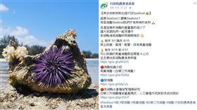 Seafood,海膽,農委會,小編(圖/翻攝自農委會臉書)