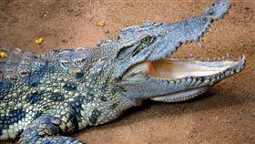 鱷魚/flickr/Ravi Jandhyala/https://flic.kr/p/bo2Dwe