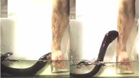電鰻,鰻魚,科學家,實驗,攻擊,Ken Catania 圖/翻攝自YouTube