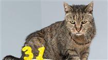 貓,英國,長壽,流浪貓,辭世,金氏世界紀錄(圖/翻攝自Westway Veterinary Group 臉書)