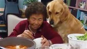 阿嬤,狗,寵物,吃飯,乞求,黃金獵犬(圖/翻攝自汪汪仙貝臉書)