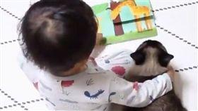 貓,兄,弟,姊,妹,寵物,家人,家長,故事,繪本,肩膀,窩心,寶貝,搭肩 圖/翻攝自Cats Planet https://goo.gl/ew6xnb