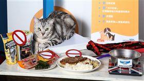 驚!台灣6成寵物需減肥 近3成貓中高度風險 美國寵物食品協會提供