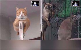 貓咪趴窗框,眼神超霸氣。(合成圖/翻攝自臉書粉專「Shotded」)