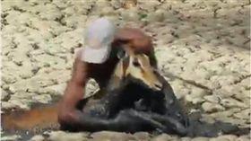 動物,小鹿,非洲,受困,救援,泥巴,泥濘