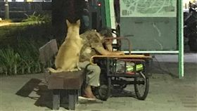 阿嬤走累坐在公園閉眼休息…忠犬不離不棄 全程在旁守候 圖/翻攝自臉書社團《米克斯傳奇》