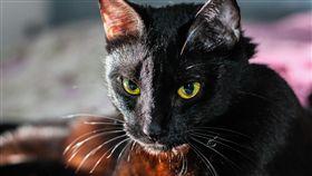 貓咪,貓,黑貓(圖/pixabay)