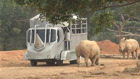 六福村打造全球唯一犀牛車,和犀牛近距離接觸刷背。