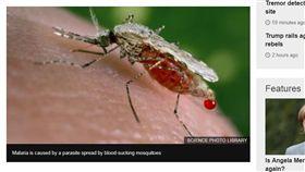 16:9 至今無藥可醫…東南亞超級瘧疾疫情擴散 全球拉警報 圖/翻攝自BBC http://www.bbc.com/news/health-41351160