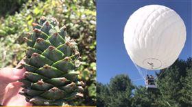氫氣球,松子 圖/翻攝自微博