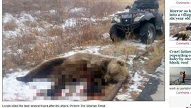 俄羅斯,棕熊,射殺(圖/翻攝自《西伯利亞時報》) http://siberiantimes.com/other/others/news/horror-as-brown-bear-walks-into-a-village-and-grabs-one-of-six-year-old-twins/