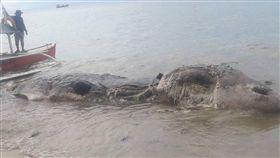 菲律賓,海灘,海怪,鯨魚,腐爛,巨獸(圖/翻攝自臉書Nujnuj Capistrano)https://www.facebook.com/photo.php?fbid=1462659173847847&set=pcb.1462659543847810&type=3&theater