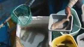 廣東珠海黃男,全家吃海鰻魚中毒,誤食「雪卡毒素」,此毒性非常強,甚至比河豚毒素强100倍!(圖/翻攝自廣州日報)