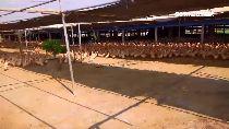 蘇丹紅出爐1100.
