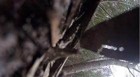 澳洲,楔尾鷹,猛禽,空拍機,地圖,憤怒鳥,攻擊(圖/翻攝自Drone Snaps Photography YouTube)