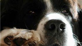 批踢踢,PTT,地下室,怪癖,臭味,霉味,貓,狗,寵物 圖/Pixabay