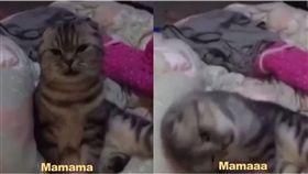 喵星人,貓皇,講話,說話,貓咪,媽媽 圖/翻攝自臉書